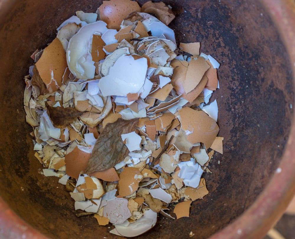 Broken Egg Shells Deter Snails