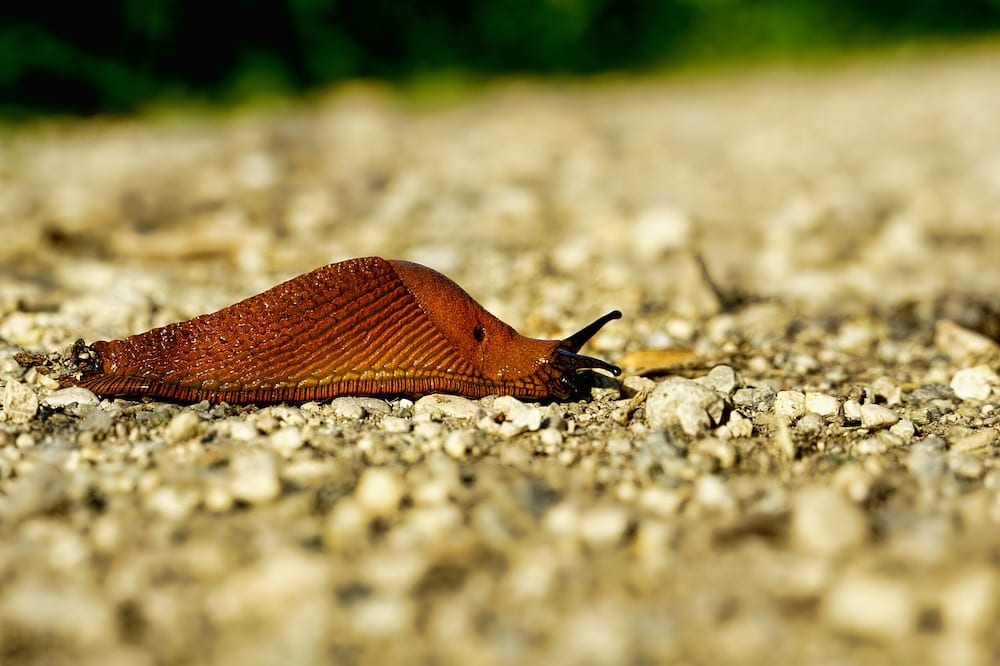 What is a Slug
