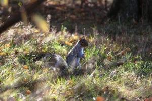 Do Squirrels Deter Birds