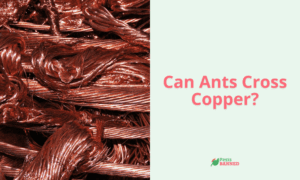 Can Ants Cross Copper