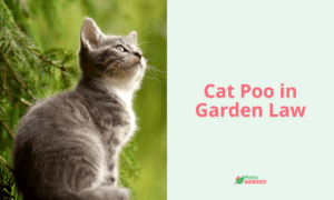 Cat Poo in Garden Law
