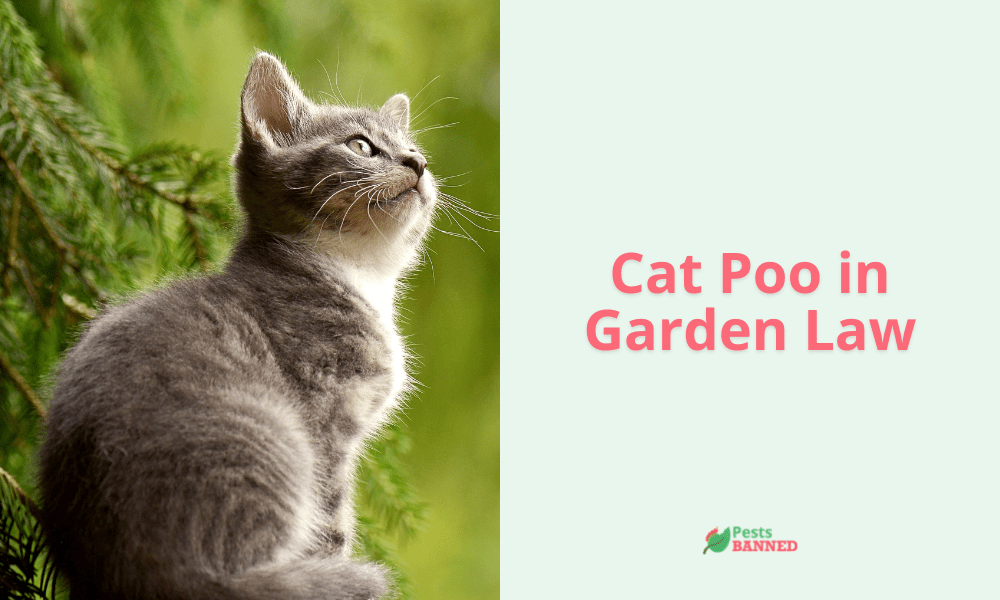Cat Poo in Garden Law