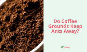 Do Coffee Ground Keep Ants Away