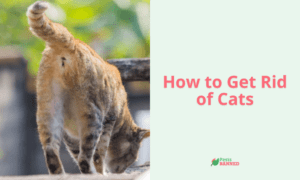 How to Get Rid of Cats