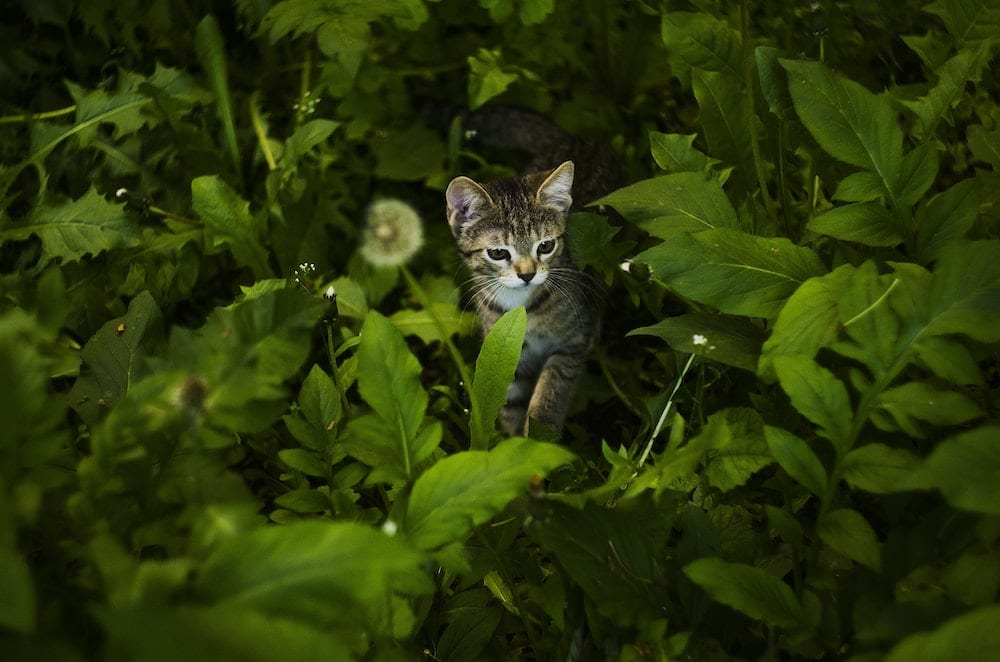 Cats Right to Roam Law