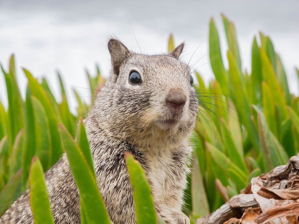 What Do Squirrels Hate