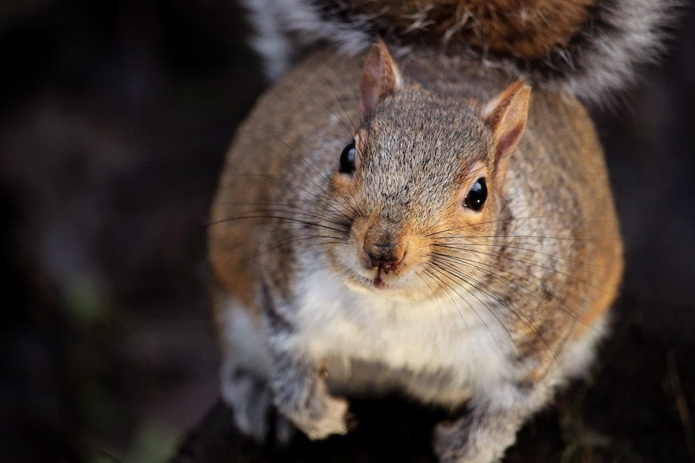 What Frightens Squirrels
