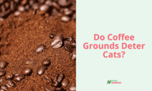 Do Coffee Grounds Deter Cats