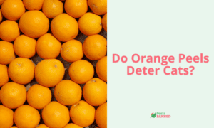 Do Orange Peels Deter Cats