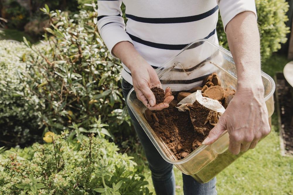 Sprinkle Coffee Grounds to Deter Slugs