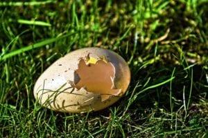 Do Eggshells Deter Slugs