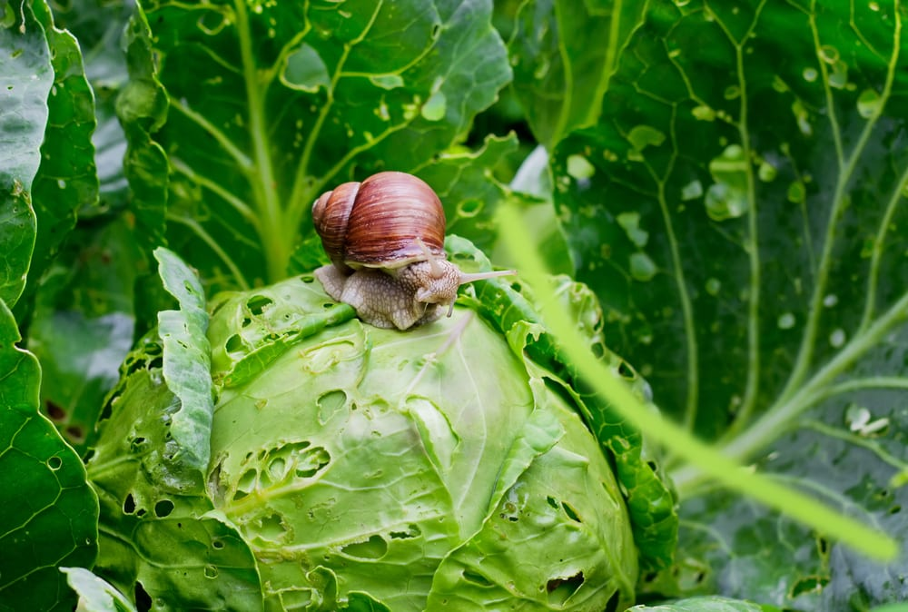 Get Rid of Snails