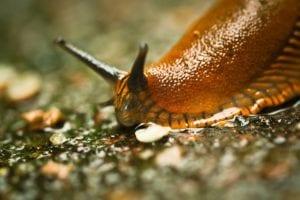 What Eats Slugs
