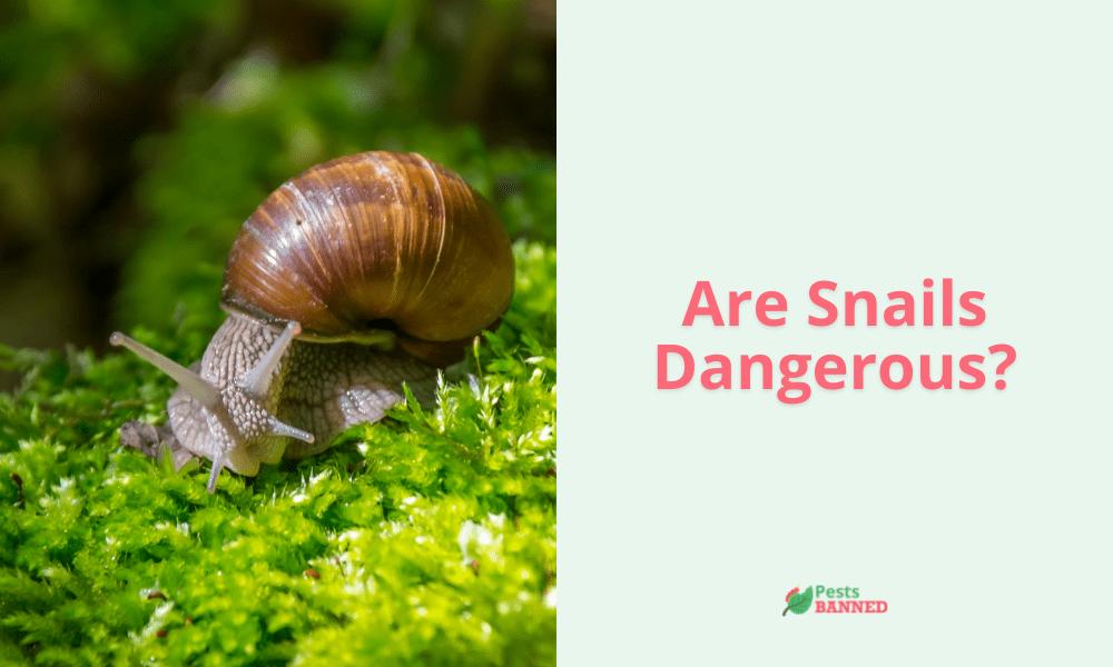Are Snails Dangerous