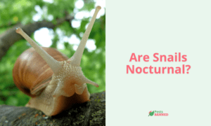 Are Snails Nocturnal