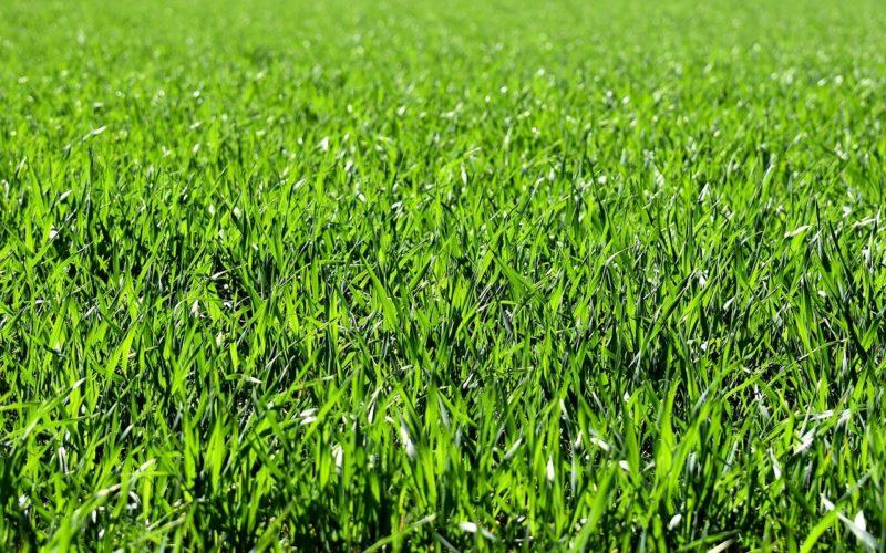 Do Slugs Eat Grass