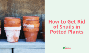 How to Get Rid of Snails in Potted Plants