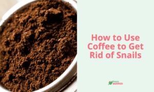 How to Get Rid of Snails with Coffee