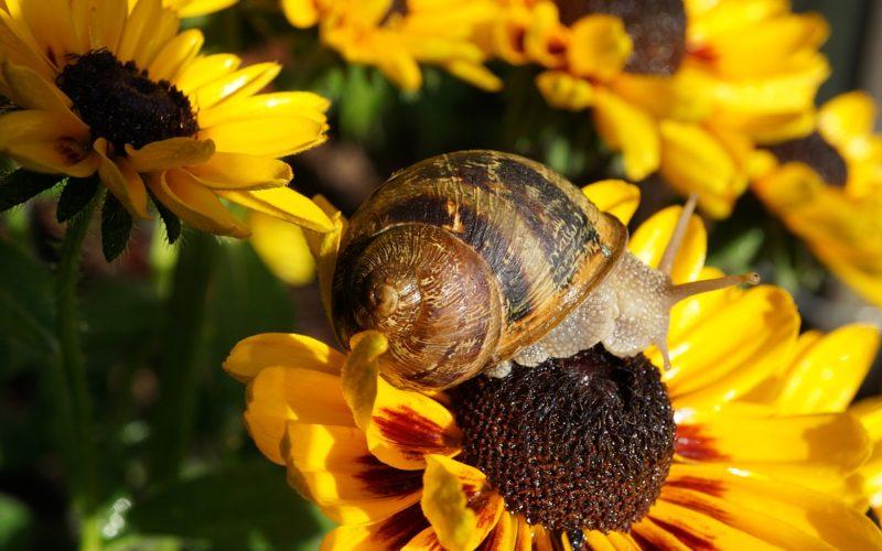 Natural Snail Repellent