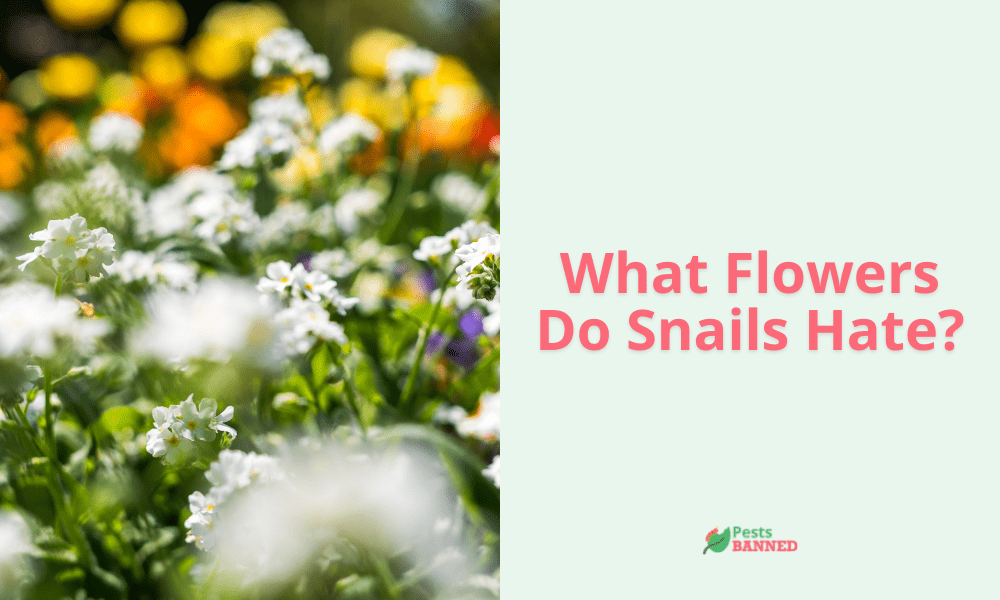 What Flowers Do Snails Hate