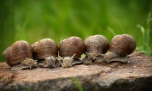 Benefits of Snails in the Garden