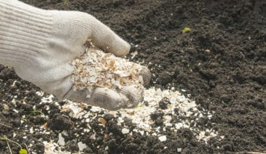 Do Crushed Eggshells Deter Snails