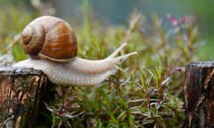 What Do Garden Snails Eat