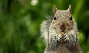Are Squirrels Dangerous