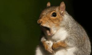 Are Squirrels Vermin