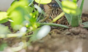 What Plants Do Cats Hate