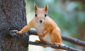 Why Are Red Squirrels Endangered in the UK